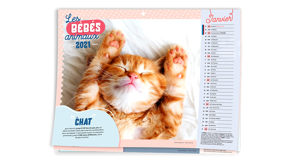 Calendrier Chat 2021 Calendrier Bébé animaux 2021   Initiatives Calendriers